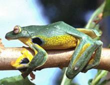 Wwf, sull'Himalaya 350 nuove specie  minacciate da cambiamento clima