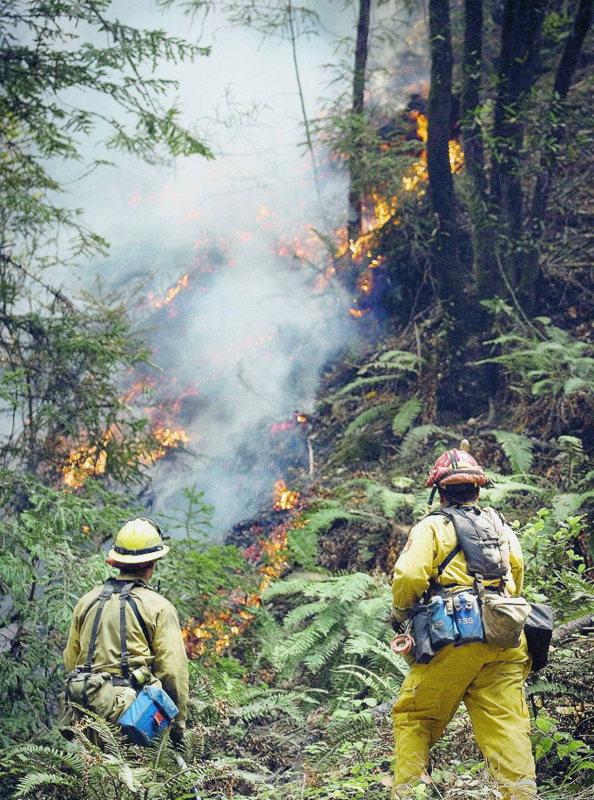 California in fiamme e Schwarzy ordina: abbandonate le case