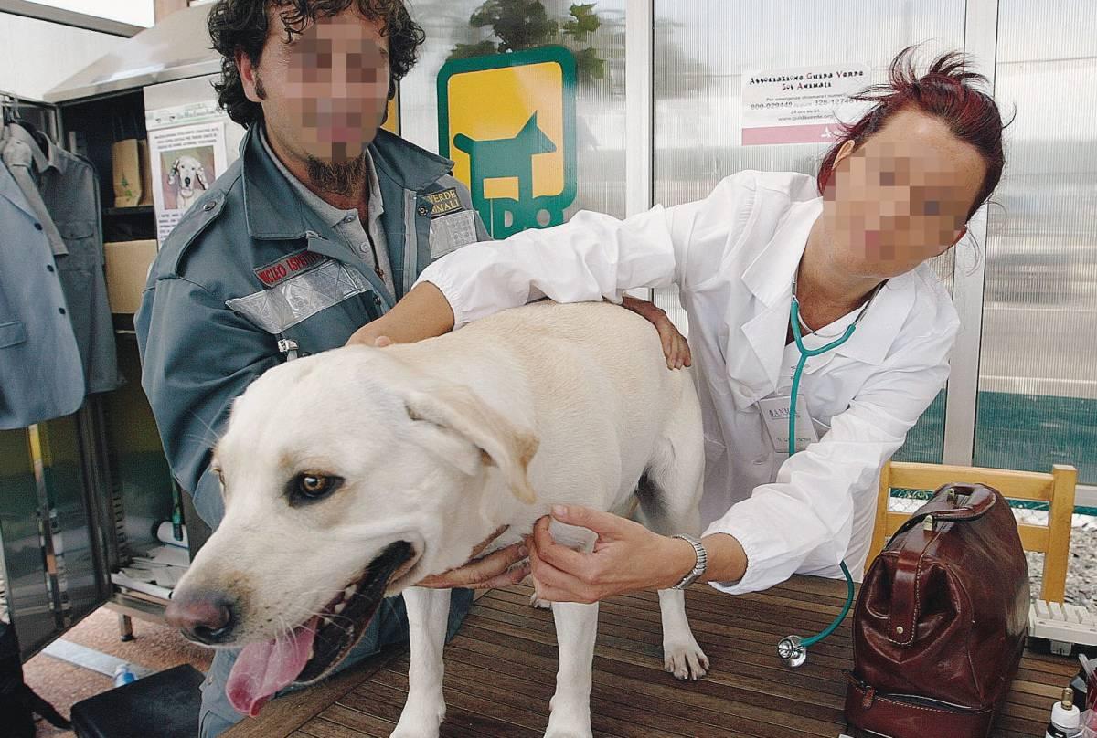 L'appello: cani e gatti hanno diritto   a morire senza alcuna sofferenza