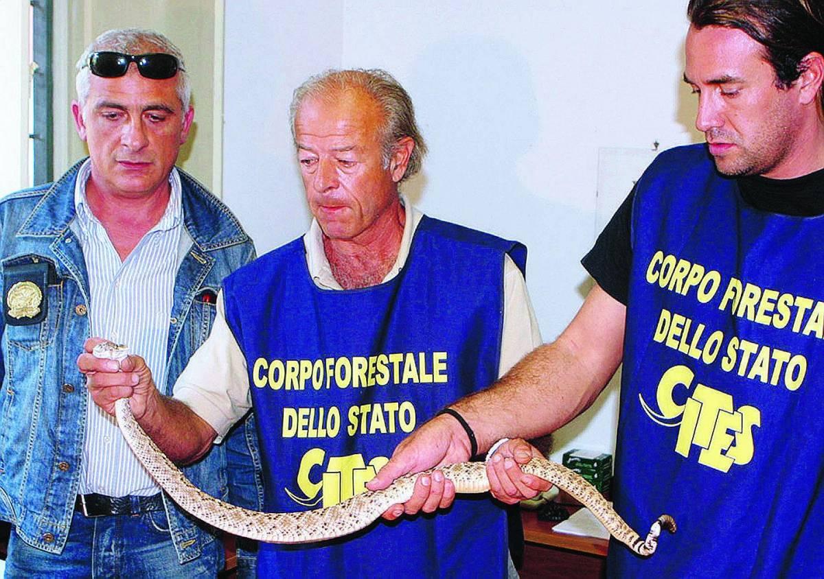 Pineta liberata dal serpente a sonagli