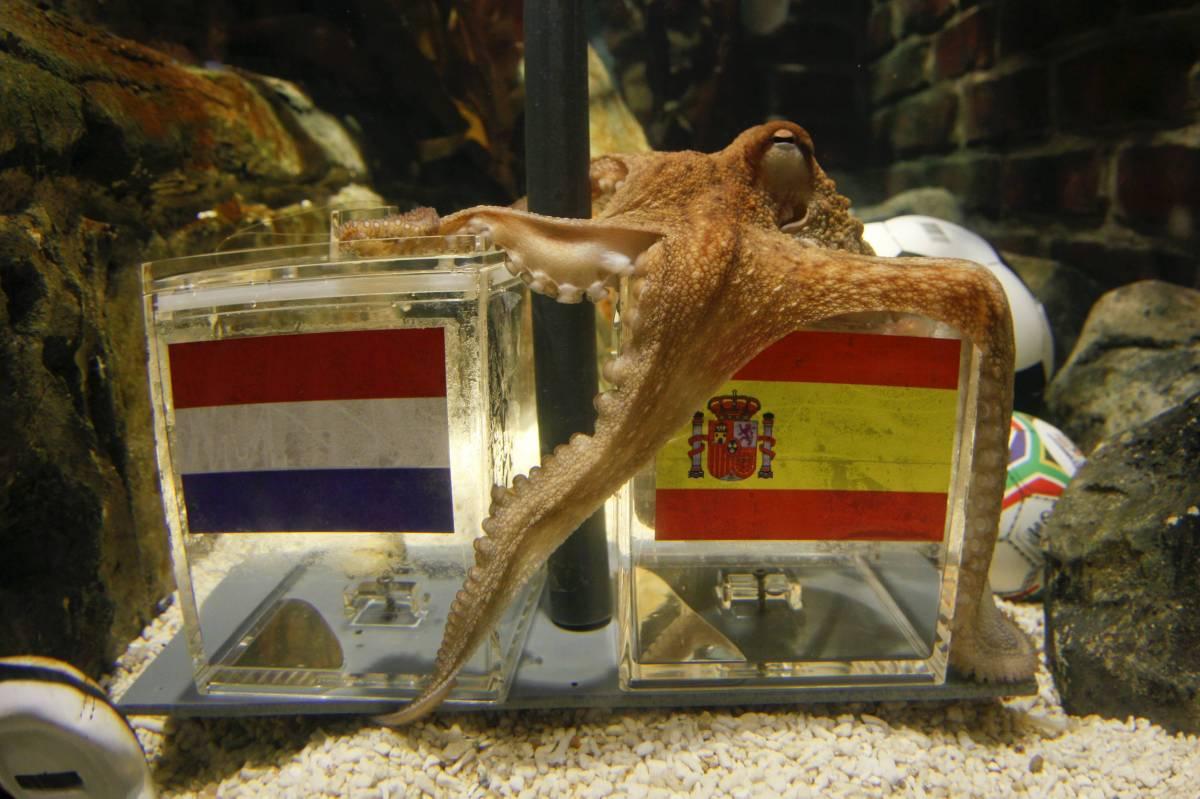 Il polpo Paul: Spagna campione, Germania terza