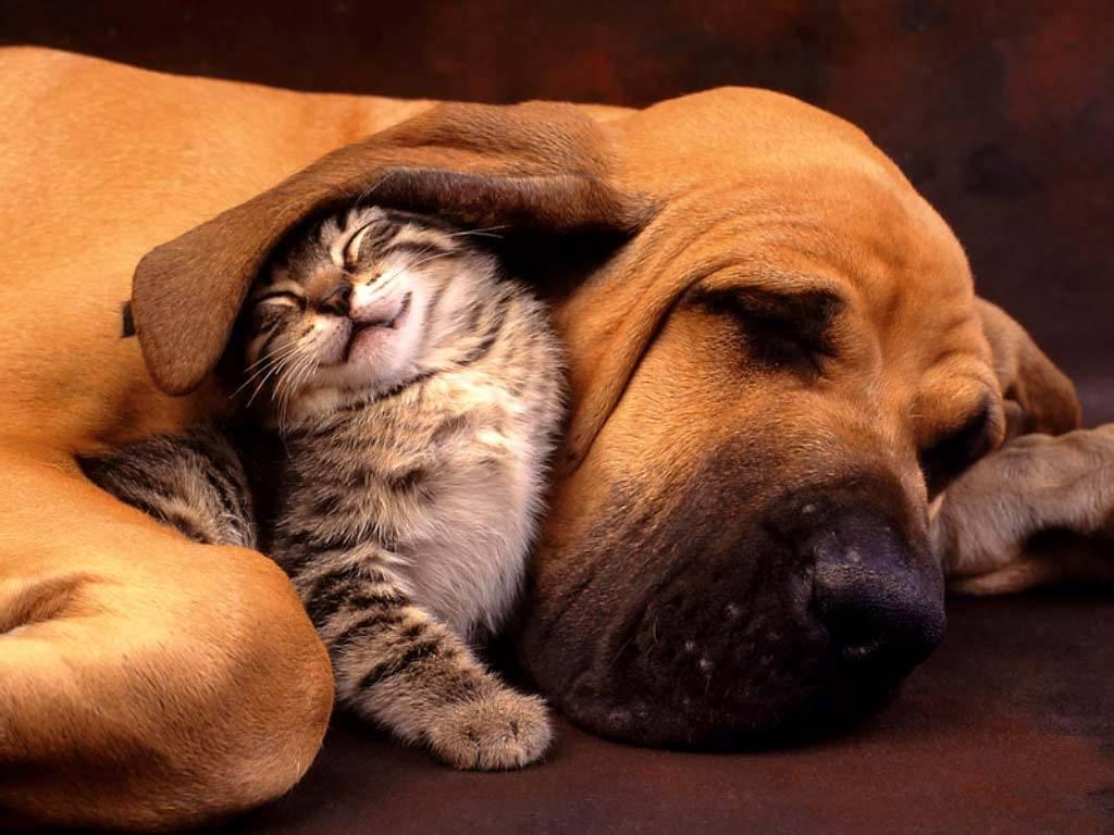 """Chi ama gli animali   non può dire """"no""""  alla loro dolce morte"""