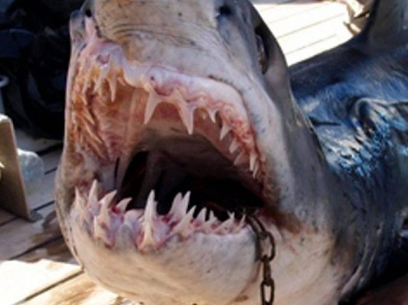 Paradiso delle Seychelles  attaccato dagli squali:  morti 2 turisti in 15 giorni