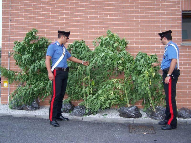 Viterbo, coltivava marijuana nella caserma  Arrestato un maresciallo dei carabinieri