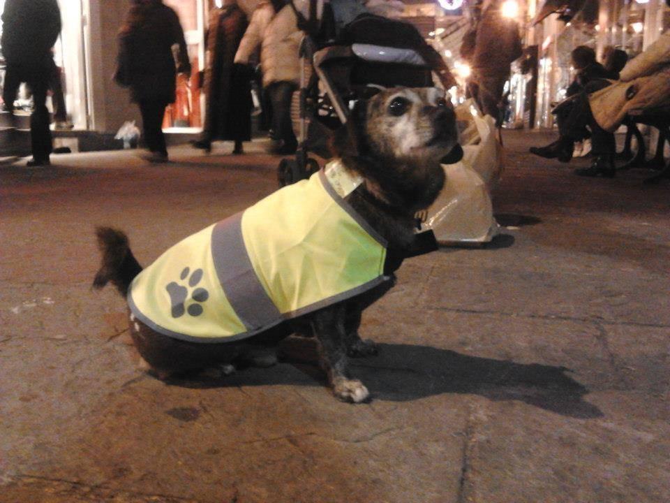 Camillo, il cane che prende il bus da solo