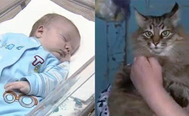 La super gatta salva il neonato abbandonato al freddo polare