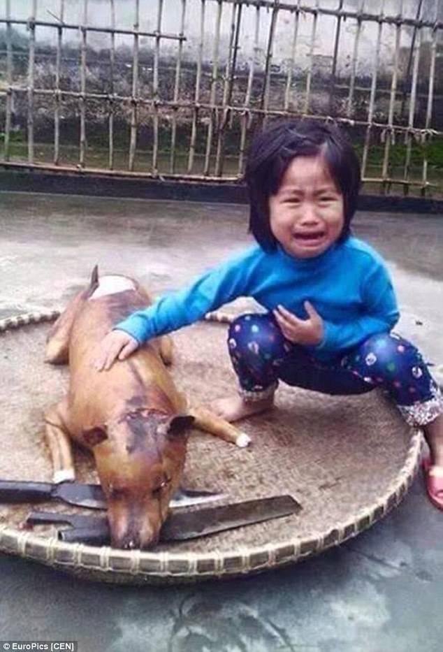 Bimba perde il cane: lo trova in rosticceria (ma è stato arrostito)