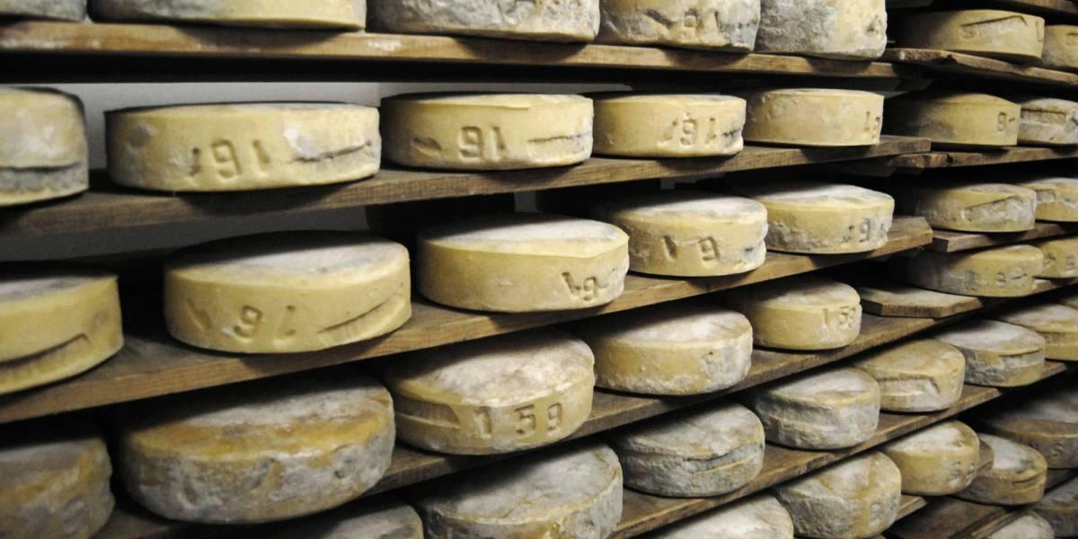 Dietro la guerra del latte c'è il derby dei formaggi