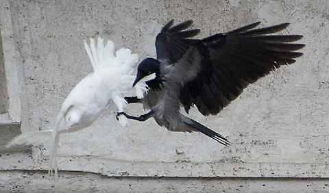 Il dossier di tre frati detective svelò al Papa i nomi dei corvi