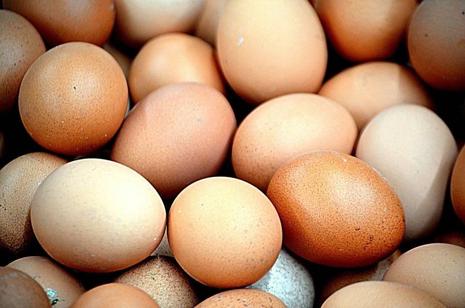 Oltre 200mila uova a rischio sequestrate a Roma e Parma