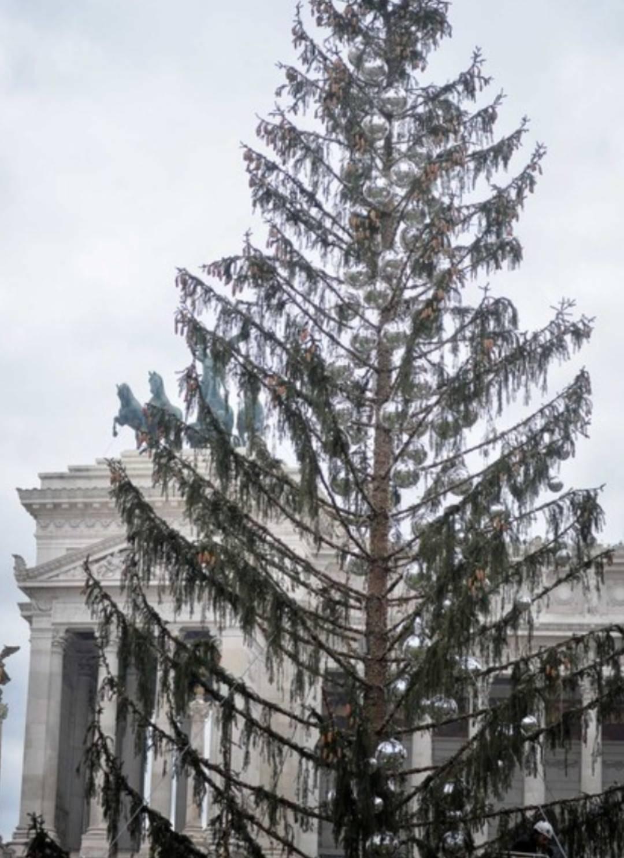 """""""Spelacchio"""", l'albero che imbarazza la Raggi"""