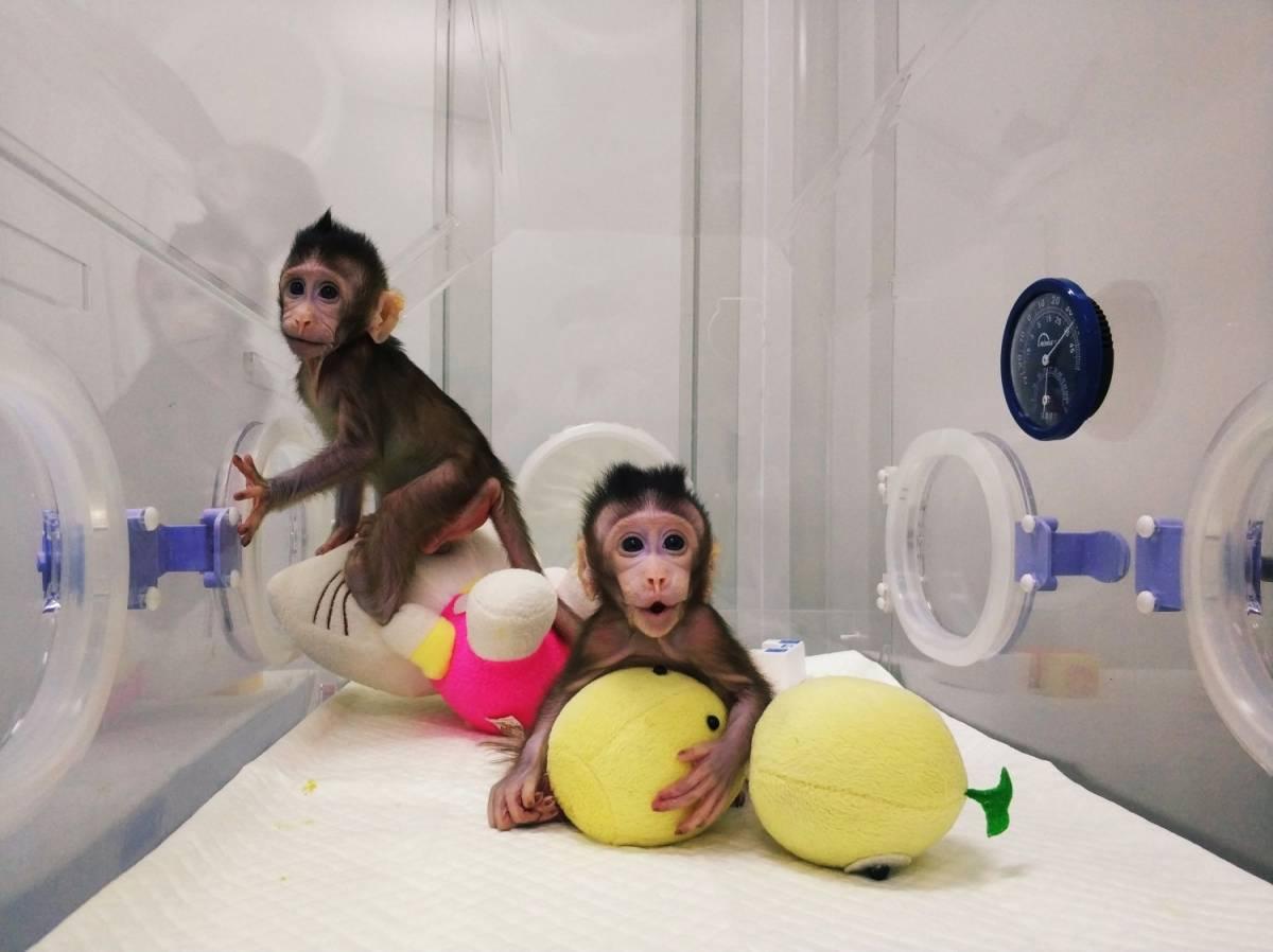"""Come andranno i mercati finanziari? Basta chiedere al """"pianeta delle scimmie"""""""