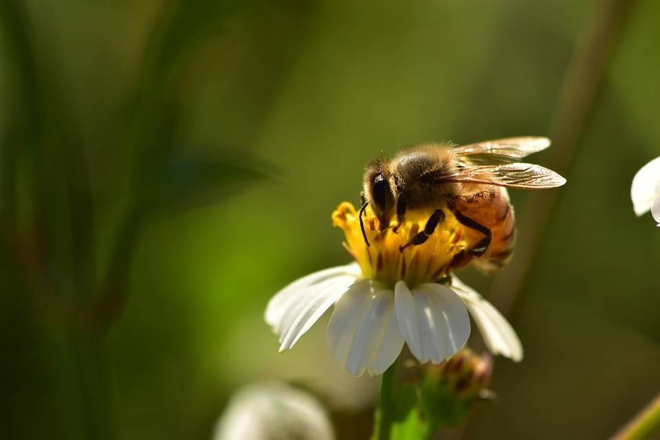 Vietati i pesticidi killer: l'Ue salva le api