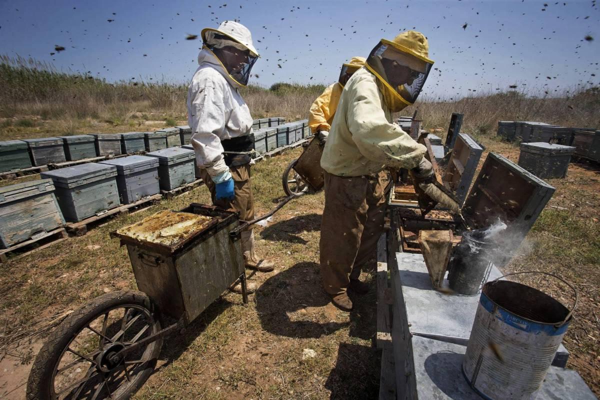 Il miele è il nuovo oro. E i ladri ora rubano le api