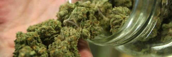 Ministero Salute: la cannabis può essere prescritta per tutti i dolori