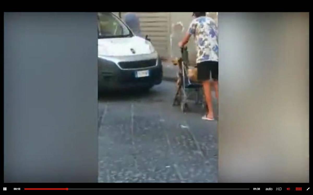 """Napoli, capretto in carrozzina per il rito musulmano: """"Fermo, non sgozzarlo"""""""