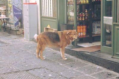 È morto Billy, il cane che per anni ha visitato la tomba del suo padrone