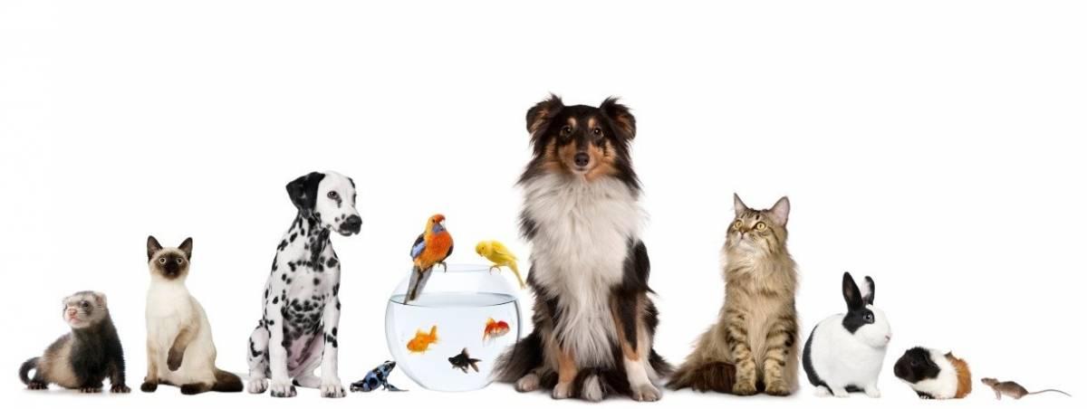 Milano Pet Week, festa diffusa nella città amica degli animali
