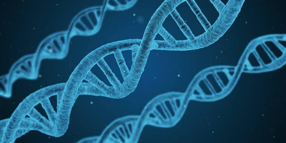 Un gene difettoso aumenterebbe il rischio di contrarre il Covid