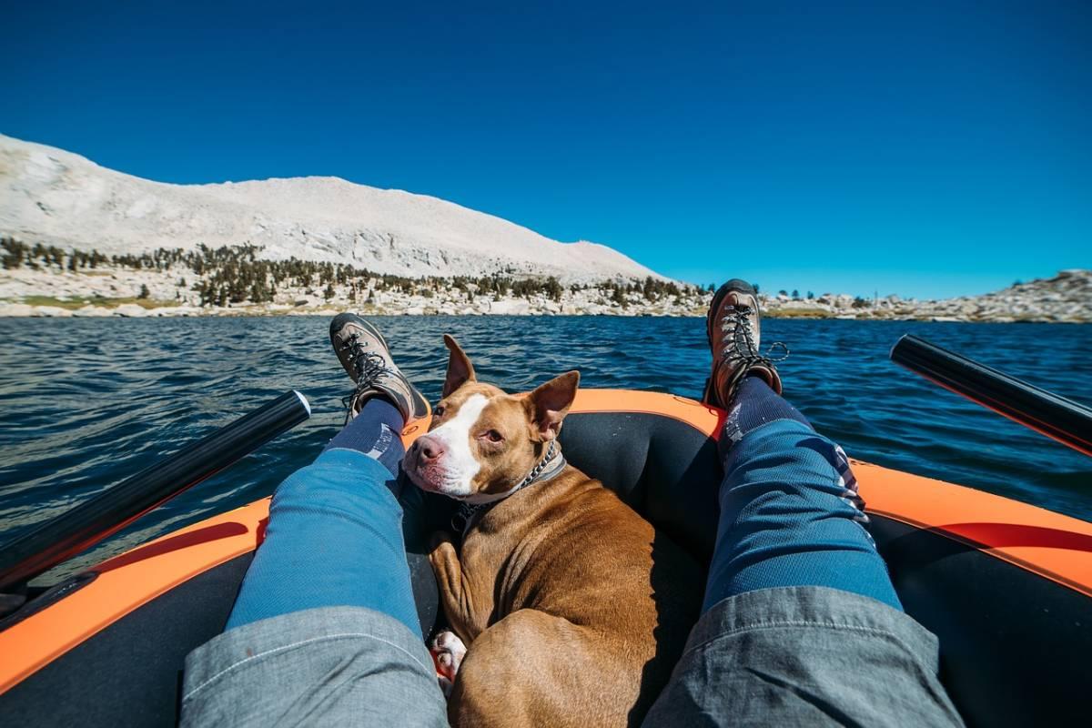 Cane trovato in acqua a 200 chilometri dalla riva