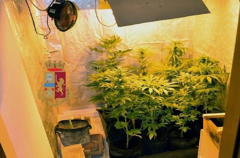 Una mini piantagione di marijuana in casa: arrestato