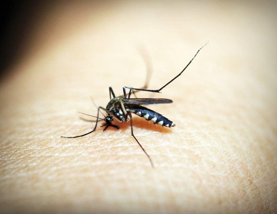 Vaccino contro la malaria in arrivo in Malawi, è il primo
