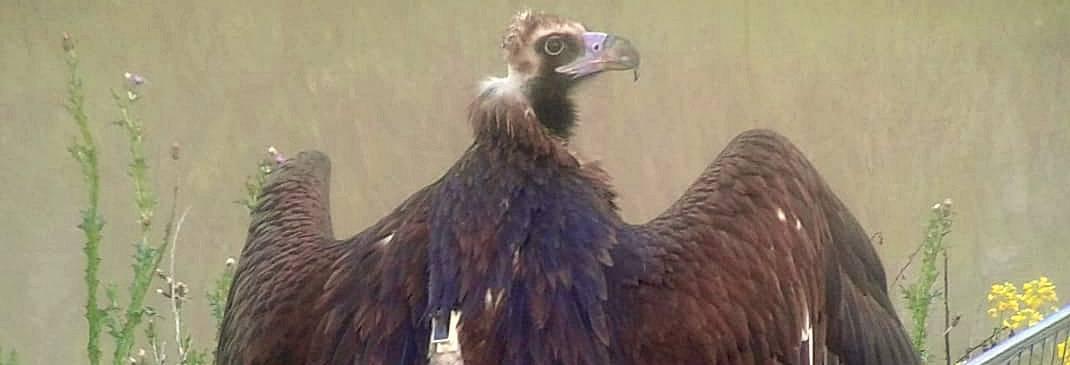 Il viaggio di 200 km dal Canyon alla costa dell'avvoltoio spinto dalla fame