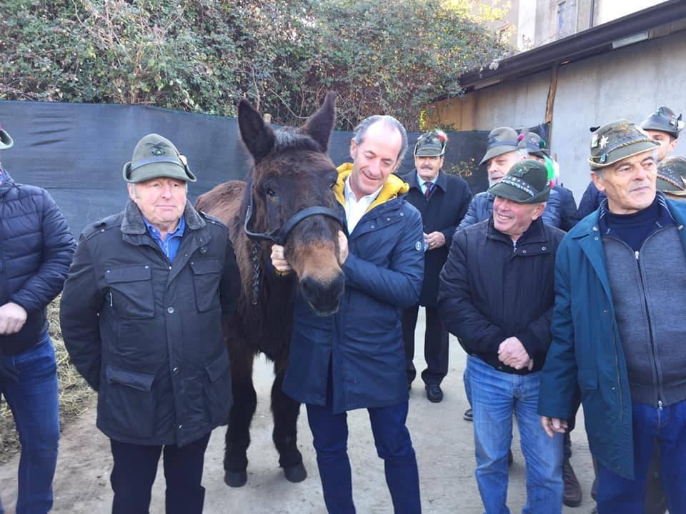 Morto Iroso, mulo alpino più vecchio di Italia