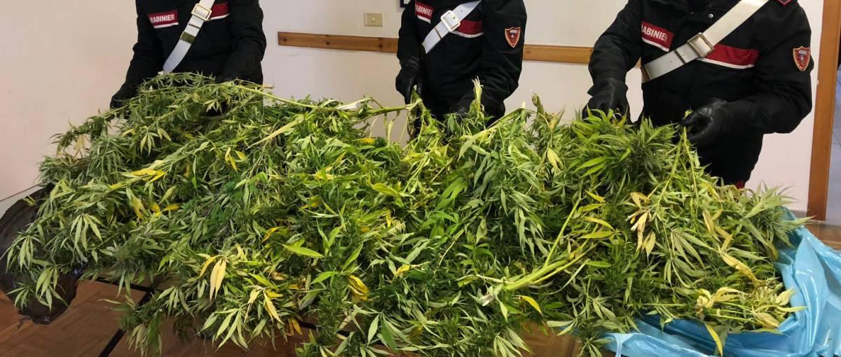 """San Patrignano critica la Cassazione sulla cannabis: """"Ora sembrerà innocua"""""""
