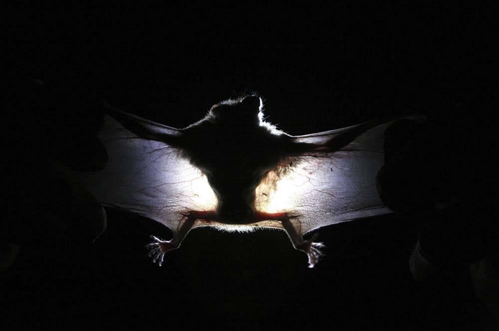 """Gatto impazzito morde donna: """"Aveva un virus dei pipistrelli"""""""