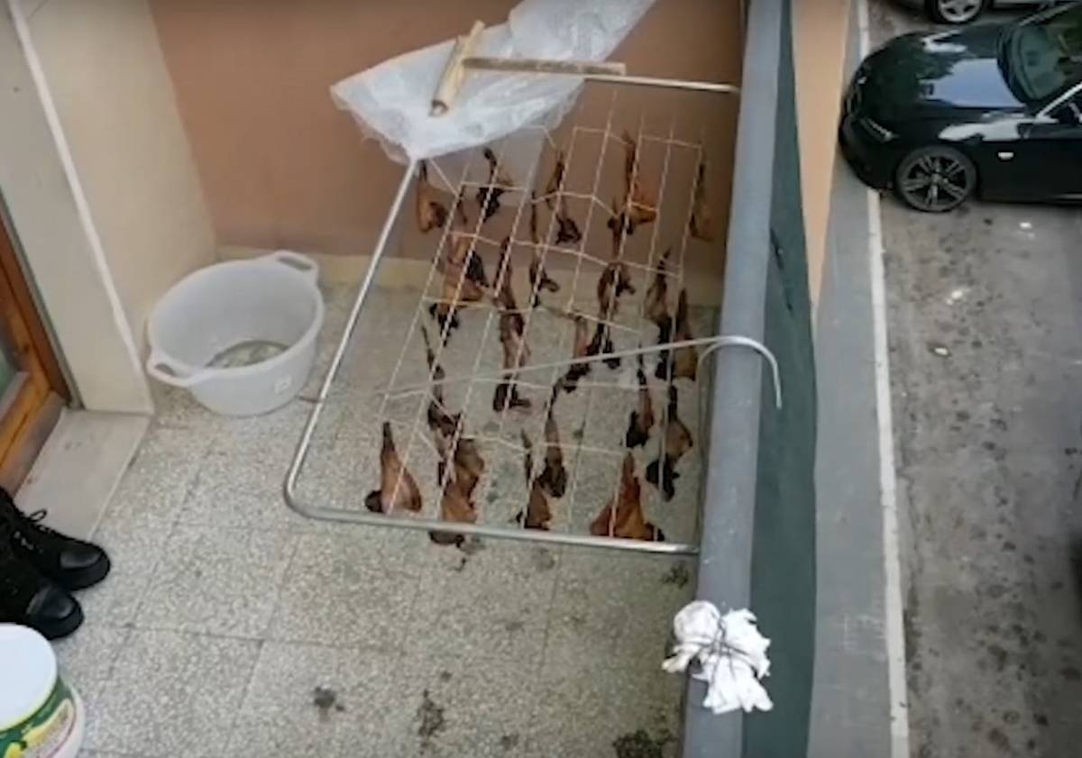 Sul balcone i pipistrelli sono stesi ad essiccare Il sangue cola in strada
