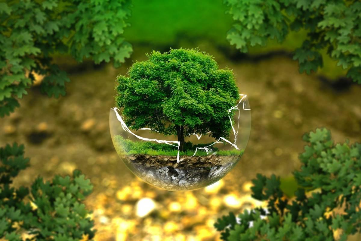 """""""Conservare la natura"""": perché la destra non può dimenticare l'ambiente"""