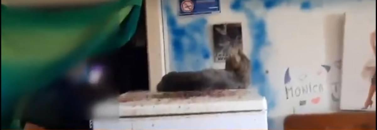 Bologna, vive nella sporcizia e negli escrementi con gatti e tartaruga: 40enne segnalato