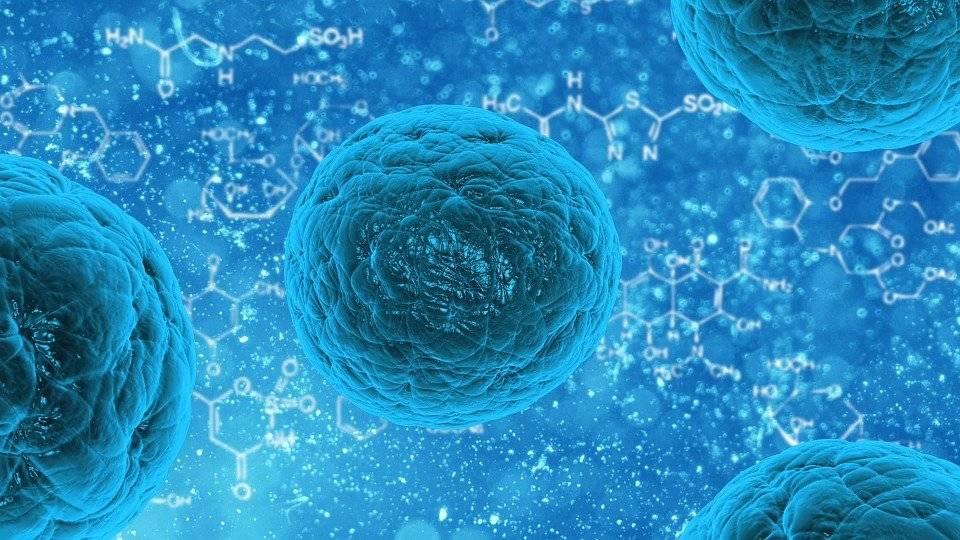 Citomegalovirus, scoperti i linfociti T Killer che contrastano l'infezione