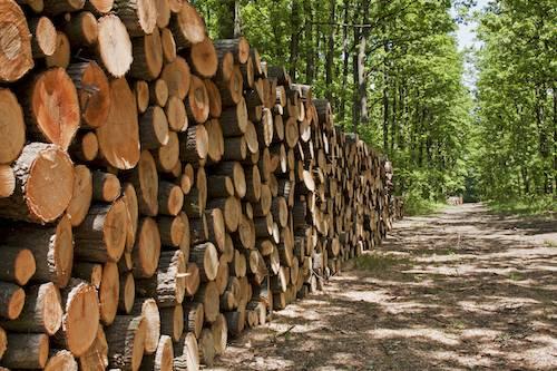 """Federlegno: """"La Russia blocca l'export di tronchi, la Ue tuteli le aziende"""""""