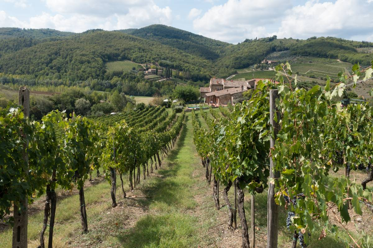 Tutti i segreti del Chianti: viaggio tra vino e cultura