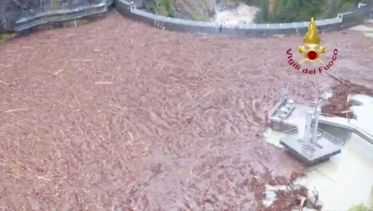 Maltempo: la strage dei boschi, caduti 14 mila alberi