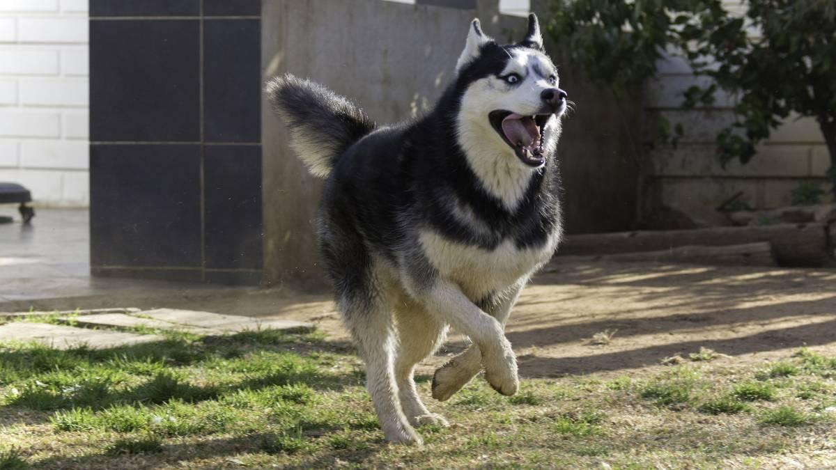 Cane strabico diventa virale, adottato grazie a Facebook