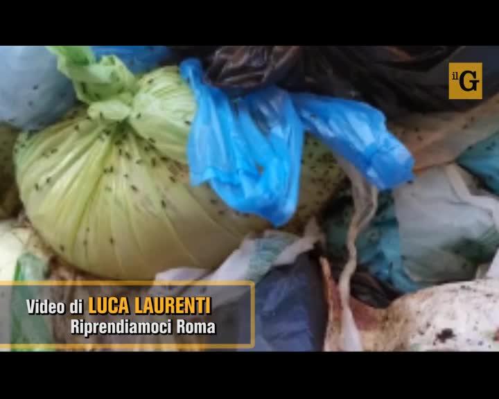 Roma, ecco il cassonetto della spazzatura infestato dagli insetti