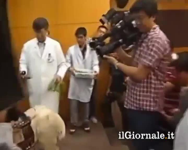 Cina: prima pecora con cuore artificiale