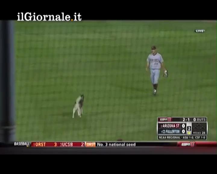 Partita di baseball interrotta da un Husky