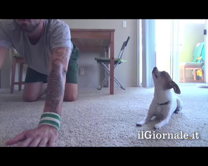 Il cagnolino fa yoga col padrone