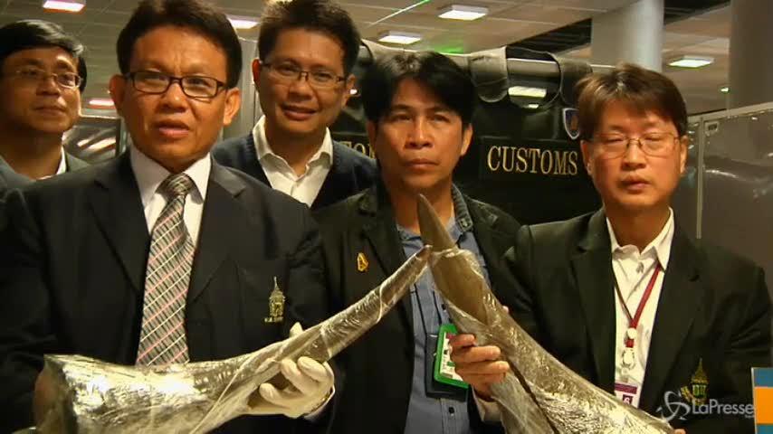 Thailandia, nove corna di rinoceronte in un bagaglio smarrito