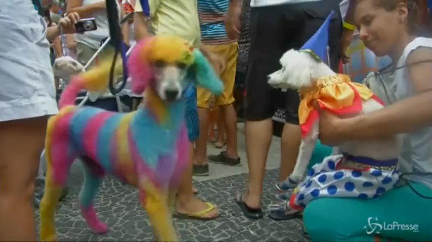 Carnevale di Rio: sfilano gli amici a quattro zampe