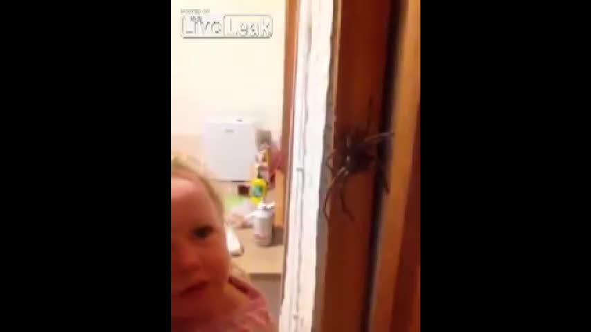 Bimba e ragno gigante a confronto: succede solo in Australia