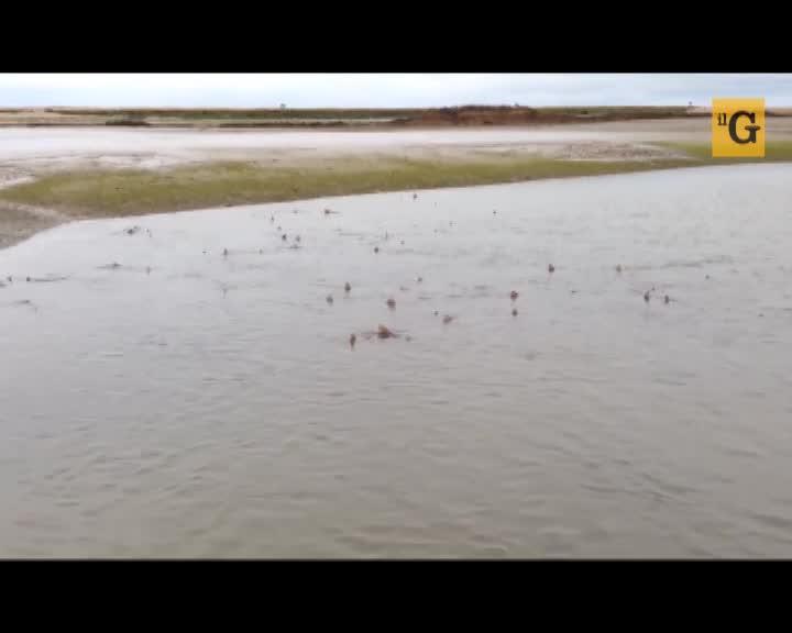 Inghilterra, l'invasione degli squali rende sconsigliabile la balneazione
