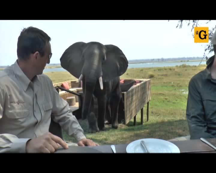 Zimbawe, elefante irrompe durante la colazione dei turisti
