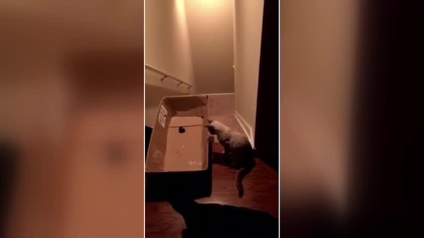 Gatto surfista per caso: a fregarlo è un laser