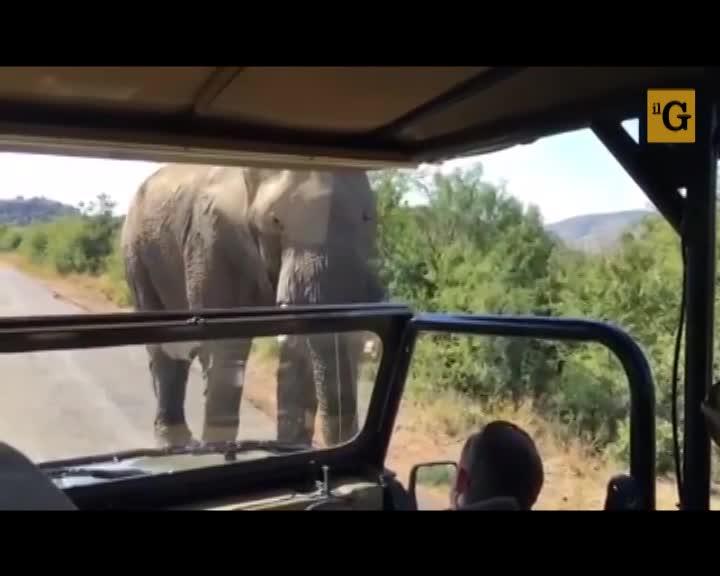 Schwarzenegger inseguito da un elefante