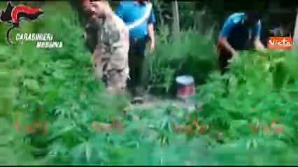 Irrigava una piantagione di canapa: arrestato assessore comunale